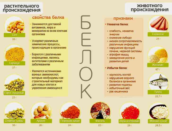 В каких продуктах содержится белок
