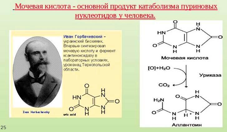 Чем опасна мочевая кислота в организме человека