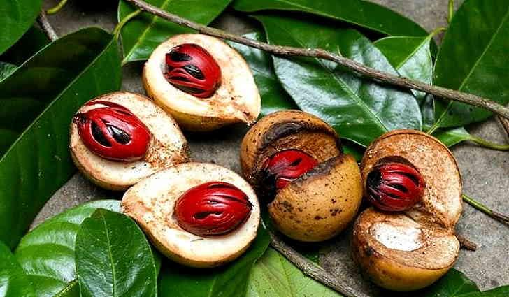 Мускатный орех лечит пневмонию