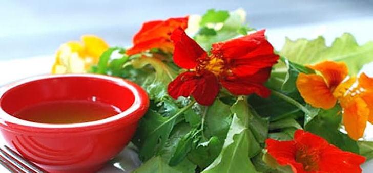 Цветок настурция лечебные свойства